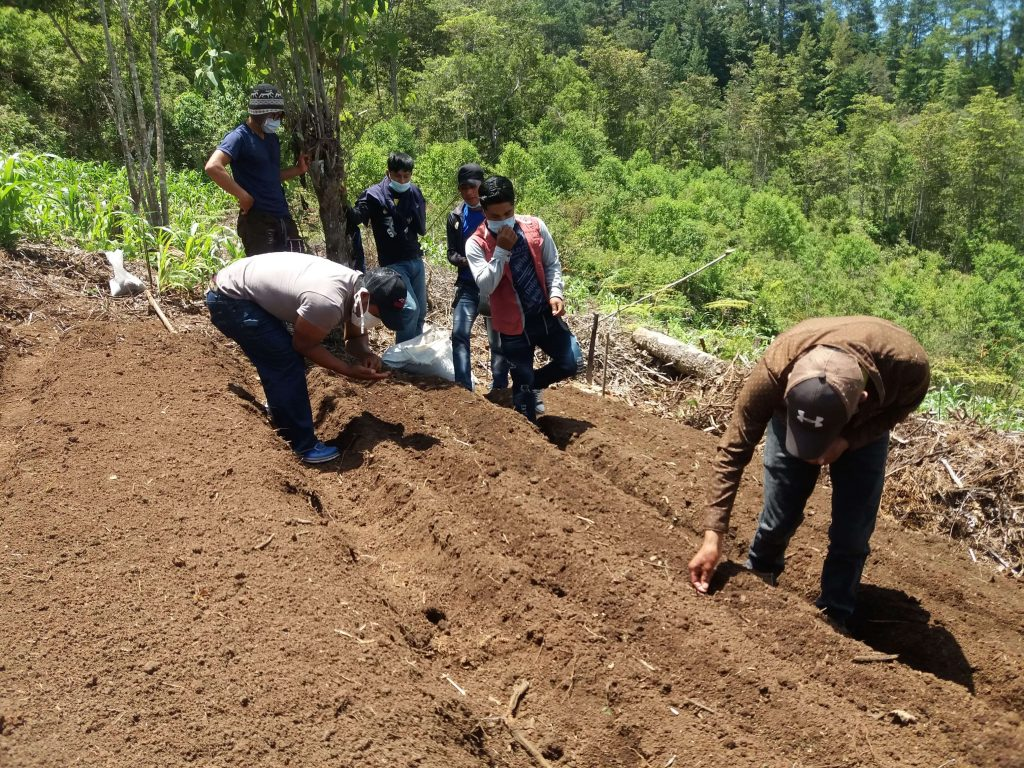 Students learning to plant coffee